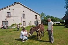 Ecotourisme Ferme Cornu cheval équestre