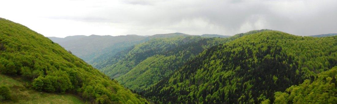 rotenbach_3_PNRBV_Alix_Badre