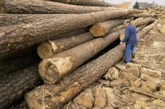 bois débardage tronc