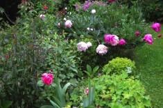 jardin de trapelune