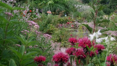 jardin-panrees