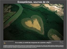 Ecosystème sources de vie