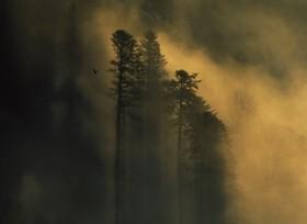 Haut de brume1 -gd corbeau