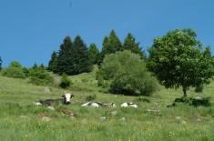 ferme auberge Wassmatt6