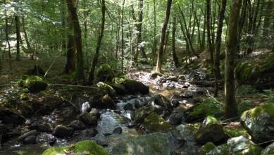 ruisseaux plateau des Mille étangs