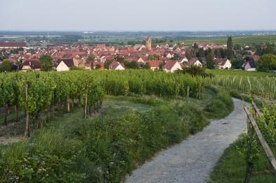 vignoble Eguisheim