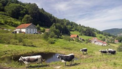 Ferme auberge Prenzières vaches