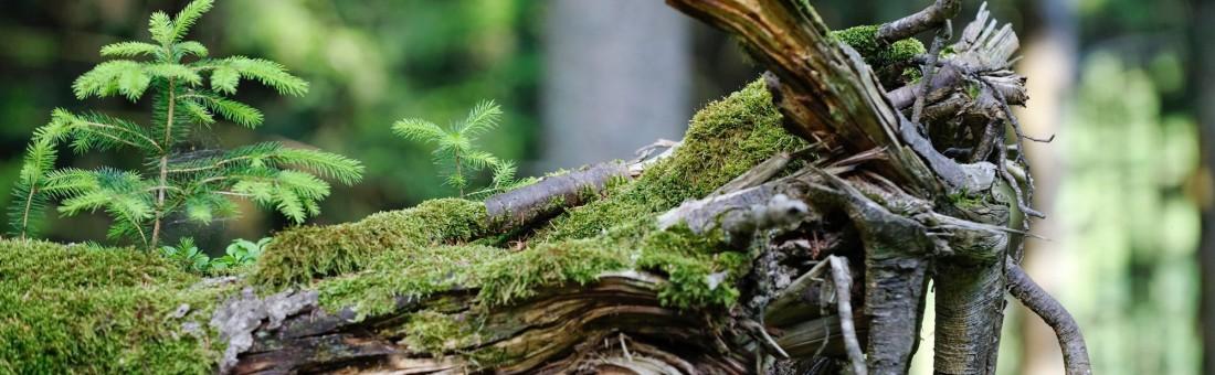 forêt tronc arbre