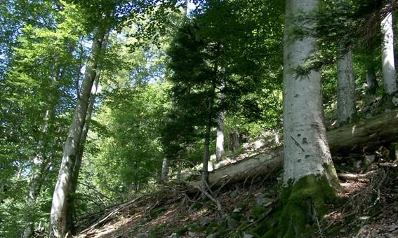 Ilôt de sénescence mis en place dans le cadre d'un contrat natura 2000 en forêt communale de Wildenstein