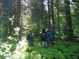 Forêt - contrat natura 2000 - action